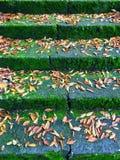 Старая лестница с мхом и листьями Стоковое Изображение