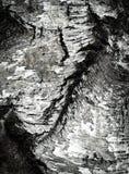 Старая деталь расшивы березы стоковые фото
