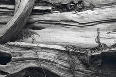 Старая деталь хобота в черно-белом Канада Стоковые Изображения