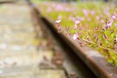 старая железная дорога Стоковые Изображения RF