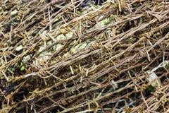 Старая загородка колючей проволоки безопасностью ржавчины Стоковые Изображения RF