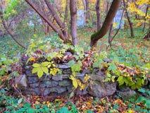 Старая загородка покрытая с заводами в каньоне, Kamenets Podolskiy, Украине Стоковое Изображение