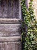 Старая запертая дверь предусматриванная в плюще Стоковые Изображения