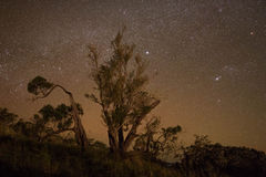 Старая звезда Scape дерева Стоковое Фото