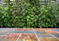 Старая каменная пустая поверхность таблицы на предпосылке зеленых кустов плодоовощ Стоковое Изображение