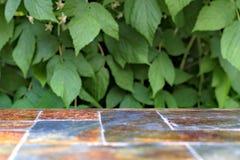 Старая каменная пустая поверхность таблицы на предпосылке зеленых кустов плодоовощ Стоковая Фотография