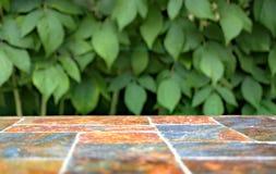 Старая каменная пустая поверхность таблицы на предпосылке зеленых кустов плодоовощ Стоковое Фото