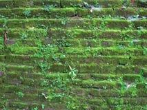 Старая каменная стена в Шри-Ланка Стоковая Фотография