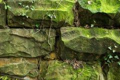 Старая каменная стена и зеленый плющ Стоковые Фото