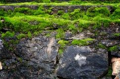 Старая каменная стена покрыла зеленый мох Стоковые Изображения