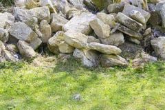 Старая каменная стена с зеленой текстурой плюща Стоковая Фотография RF