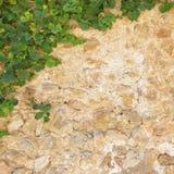 Старая каменная стена с листьями плюща Стоковая Фотография RF