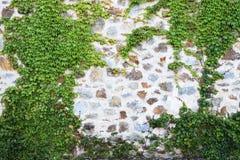 Старая каменная стена с плющом как предпосылка Стоковая Фотография RF