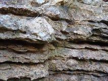 Старая каменная текстура предпосылки Поцарапанная картина стены пещеры ржавая Стоковое Изображение