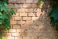 Старая кирпичная стена заклинена на сторонах зеленым растением стоковые изображения rf