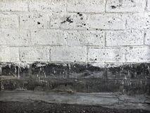 Старая кирпичная стена покрашенная с белой краской Стоковое фото RF