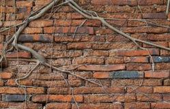 Старая кирпичная стена с деревом Стоковое фото RF