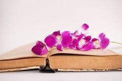 Старая книга и орхидея на белой предпосылке, изоляте Стоковое Изображение RF
