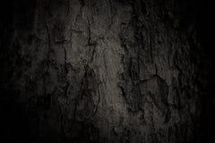 Старая кожа дерева Стоковая Фотография