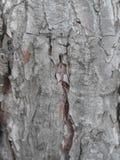Старая кожа дерева Стоковое фото RF