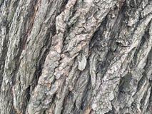 Старая кора дерева вербы Деревянная текстура элемент для дизайна стоковое изображение