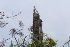Старая кора дерева в озере Стоковые Изображения RF