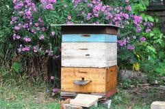 Старая крапивница пчелы в саде осени с colorfull цветет Стоковые Изображения RF