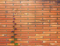 Старая красная кирпичная стена Стоковые Фото