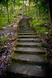 Старая лестница в середине леса Стоковое фото RF