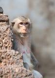Старая обезьяна смотря ее сына Стоковое Изображение