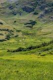Старая дорога Fall River - национальный парк Колорадо скалистой горы Стоковые Изображения