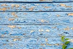 Старая доска с слезать голубые краску и крапивы стоковая фотография