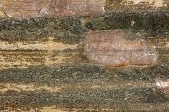 Старая пакостная и поцарапанная древесина 13 Стоковое Изображение RF