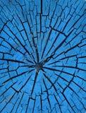 Старая пестрая краска пня ствола дерева Стоковое Изображение