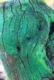 Старая пестрая краска пня ствола дерева Стоковые Фотографии RF