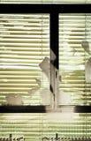 Старая покинутая дом, окно Стоковые Фотографии RF