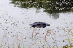 Старая покрышка в воде Стоковое Изображение RF