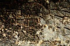 Старая постаретая предпосылка текстурированная древесиной Стоковые Изображения RF