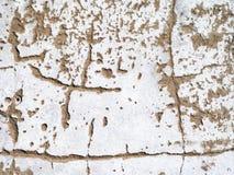 старая поцарапанная стена Стоковые Фотографии RF