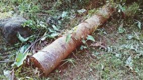 Старая предпосылка изображения ландшафта природы кокосовой пальмы Стоковые Фото