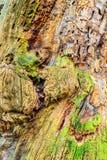 Старая предпосылка древесины дуба Стоковые Изображения
