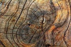 Старая предпосылка текстуры отрезка древесины Стоковая Фотография