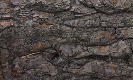Старая предпосылка темноты дерева Стоковое фото RF