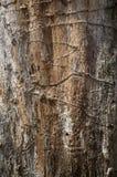 Старая приполюсная деталь текстуры камбия дерева стоковые фотографии rf