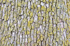 Старая расшива дерева с мхом Стоковое Изображение