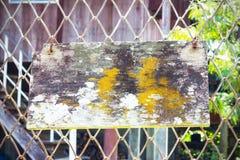 Старая древесина с смертной казнью через повешение мха и грибка на проволочной изгороди Стоковая Фотография RF