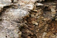 старая древесина текстуры стоковые изображения rf