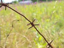 Старая ржавая загородка колючей проволоки Стоковые Изображения RF