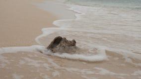 Старая сделанная ямки раковина раковины помыта вверх на пляже при малые волны завивая вокруг ее стоковое изображение