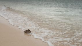 Старая сделанная ямки раковина раковины помыта вверх на пляже с белым песком карибского берега стоковое изображение